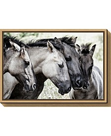 Four Konik Horses by Jaap van den Canvas Framed Art