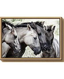 Amanti Art Four Konik Horses by Jaap van den Canvas Framed Art