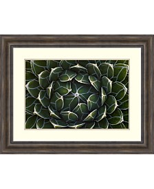 Amanti Art Queen Victoria'S Agave, Saguaro National Park, Arizona Framed Art Print