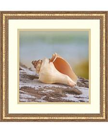 Amanti Art Shell And Driftwood IV Framed Art Print