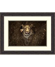 Amanti Art Leopard Resting On A Tree At Masai Mara Framed Art Print