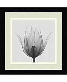 Triumph Tulip  Framed Art Print