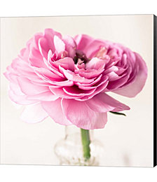 Ranuncula Pink II by Symposium Design Canvas Art