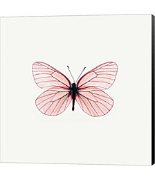 Pink Butterfly by PhotoINC Studio Canvas Art