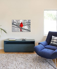 "iCanvas ""Cardinal Bird"" Gallery-Wrapped Canvas Print (18 x 26 x 0.75)"