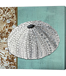 Silver Sea Urchin - Tan Side Border Teal Crackle Back by Megan Duncanson Canvas Art