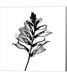 Foxglove #2 X-Ray by Bert Myers Canvas Art