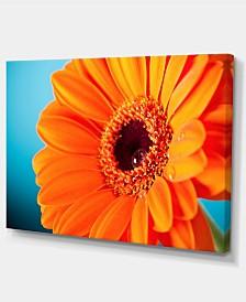 "Designart Orange Daisy Gerbera Flower Close Up Flowers Canvas Wall Art - 32"" X 16"""
