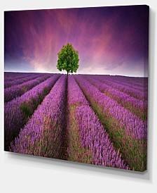 "Designart Lavender Field Sunset With Single Tree Floral Canvas Art Print - 40"" X 30"""