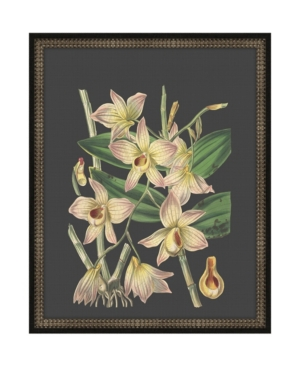 Beautiful Botanical on Black I Framed Giclee Wall Art - 17