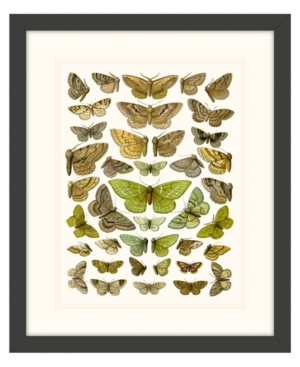 Butterfly Charts Ii Framed Giclee Wall Art - 15