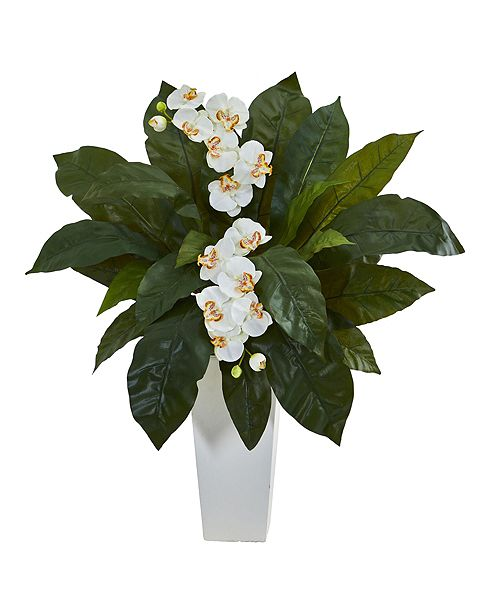 Nearly Natural Orchid and Birdsnest Fern Artificial Arrangement in White Planter