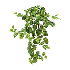 "40"" Pothos Hanging Bush, Set of 3"