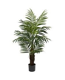 4' Areca Palm Tree