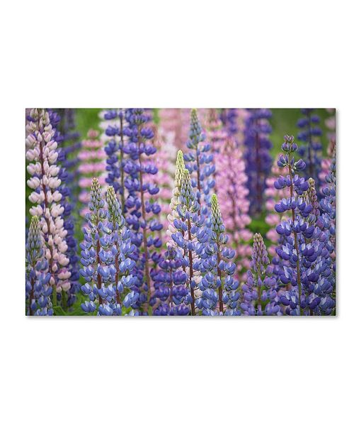 "Trademark Global Cora Niele 'Blue Pink Lupine Flowers' Canvas Art - 47"" x 30"" x 2"""