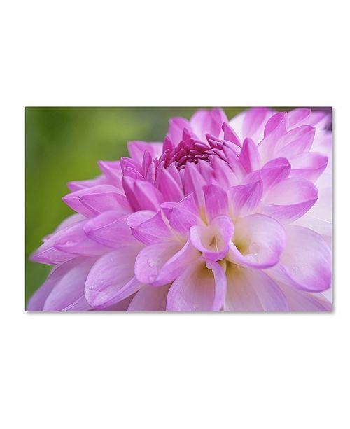 "Trademark Global Cora Niele 'Cerise Pink Dahlia' Canvas Art - 24"" x 16"" x 2"""