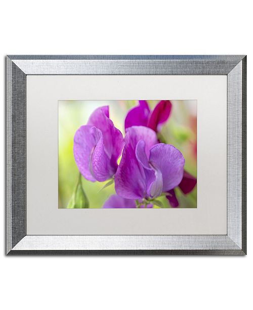 "Trademark Global Cora Niele 'Two Sweet Pea Flowers' Matted Framed Art - 20"" x 16"" x 0.5"""