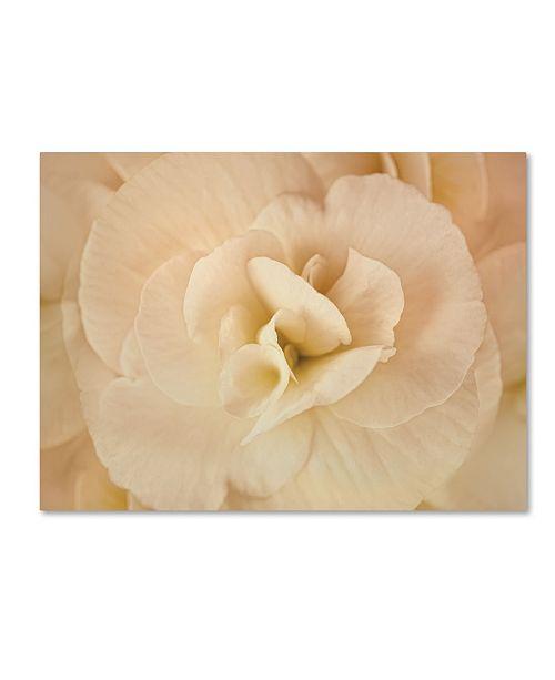 """Trademark Global Cora Niele 'Amber Begonia Flower' Canvas Art - 24"""" x 18"""" x 2"""""""