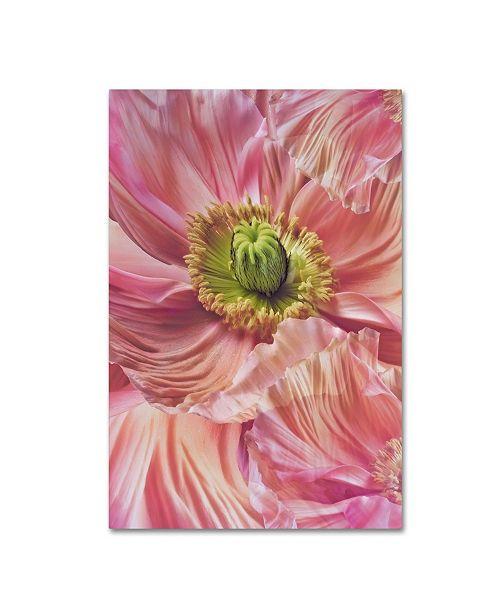 "Trademark Global Cora Niele 'Cerise Pink Poppy' Canvas Art - 24"" x 16"" x 2"""