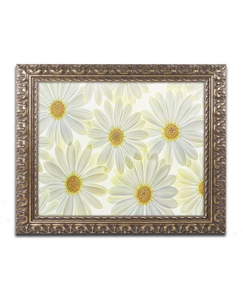 "Trademark Global Cora Niele 'Daisy Flowers' Ornate Framed Art - 20"" x 16"" x 0.5"""