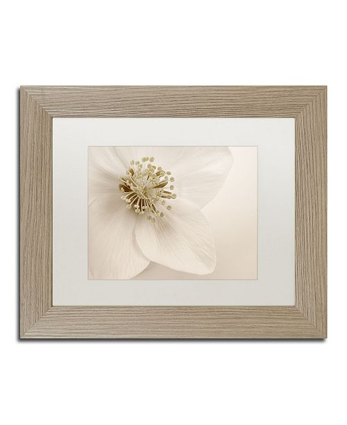 "Trademark Global Cora Niele 'Hellebore Christmas Rose' Matted Framed Art - 14"" x 11"" x 0.5"""