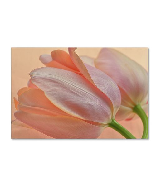 "Trademark Global Cora Niele 'Two Orange Tulips' Canvas Art - 47"" x 30"" x 2"""