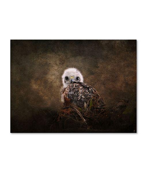 "Trademark Global Jai Johnson 'Nestling Baby Red Shouldered Hawk' Canvas Art - 32"" x 24"" x 2"""
