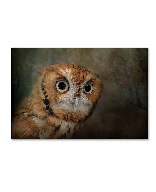 "Trademark Global Jai Johnson 'Portrait Of An Eastern Screech Owl' Canvas Art - 24"" x 16"" x 2"""