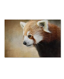 "Jai Johnson 'Red Panda Watching' Canvas Art - 32"" x 22"" x 2"""