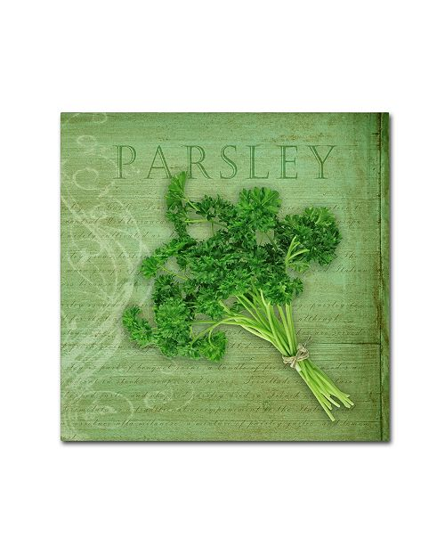 "Trademark Global Cora Niele 'Classic Herbs Parsley' Canvas Art - 24"" x 24"" x 2"""