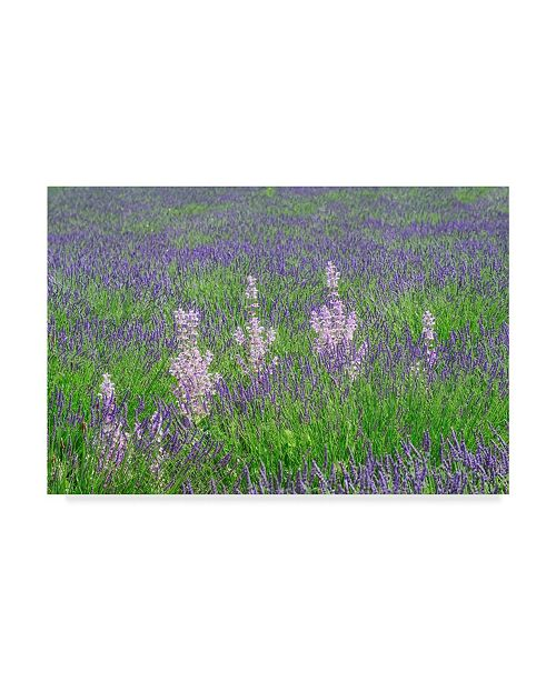 """Trademark Global Cora Niele 'Lavender Fields With Clary Sage' Canvas Art - 19"""" x 12"""" x 2"""""""