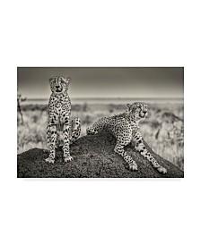 "Henrike Scheid 'Two Cheetahs Watching Out' Canvas Art - 32"" x 2"" x 22"""