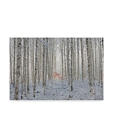 """Dong Hee Han 'White Forest' Canvas Art - 24"""" x 2"""" x 16"""""""
