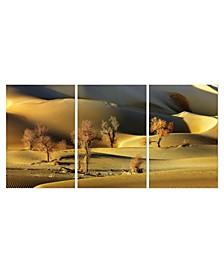"""Decor Golden Desert 3 Piece Wrapped Canvas Wall Art -27"""" x 60"""""""