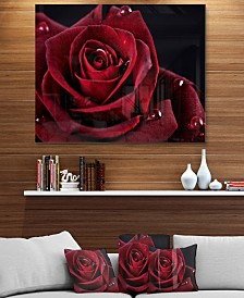 "Designart 'Red Rose With Raindrops On Black' Flowers Metal Wall Artwork - 40"" X 30"""