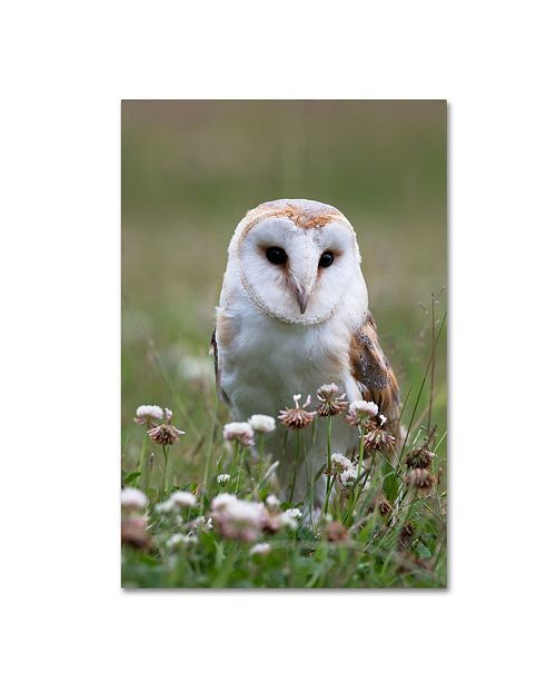 "Trademark Global Robert Harding Picture Library 'Owls' Canvas Art - 19"" x 12"" x 2"""