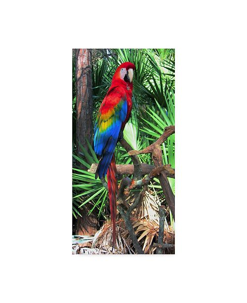 "Trademark Global Robert Michaud 'Macaw' Canvas Art - 24"" x 12"" x 2"""