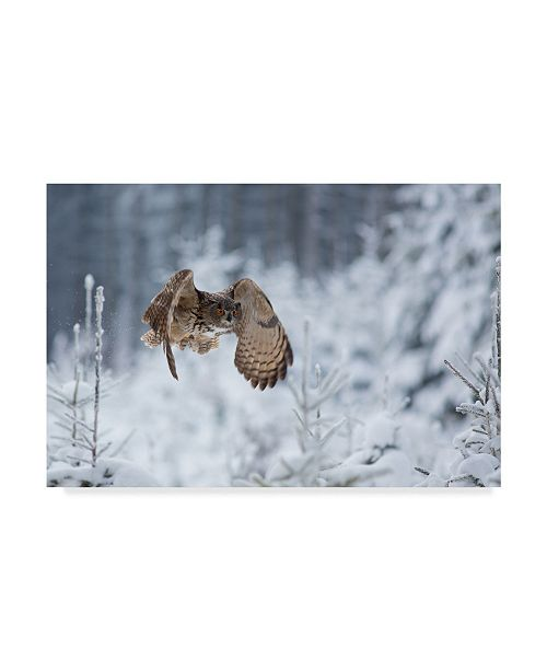 "Trademark Global Milan Zygmunt 'Eagle Owl In Winter' Canvas Art - 19"" x 2"" x 12"""