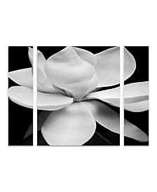 "Michael Harrison 'Magnolia' Multi Panel Art Set Large 3 Piece - 34"" x 44"" x 2"""