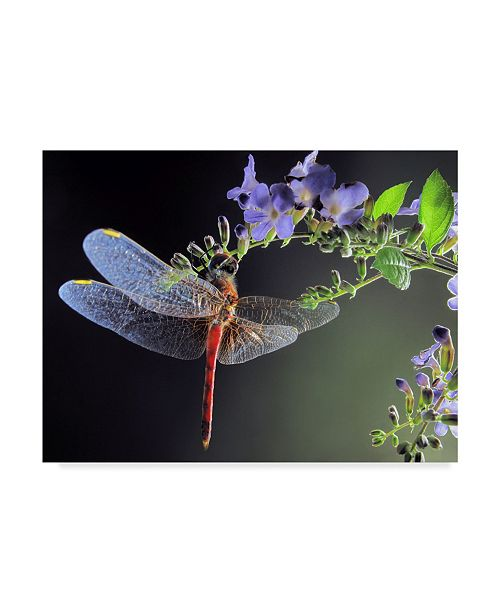 "Trademark Global Jimmy Hoffman 'Dragonfly Red' Canvas Art - 32"" x 2"" x 24"""