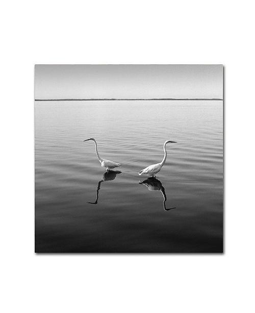 "Trademark Global Moises Levy '2 Herons' Canvas Art - 35"" x 35"" x 2"""