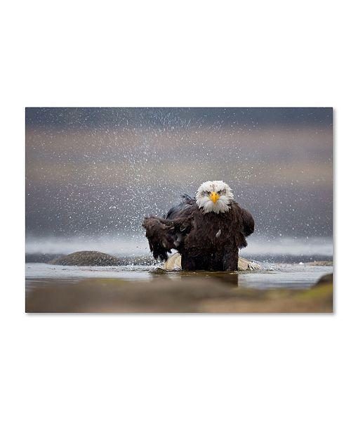 "Trademark Global Milan Zygmunt 'Bald Eagle' Canvas Art - 47"" x 30"" x 2"""