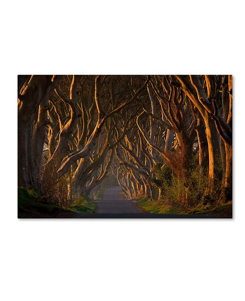 "Trademark Global Piotr Galus 'The Dark Hedges In The Morning Sunshine' Canvas Art - 24"" x 16"" x 2"""