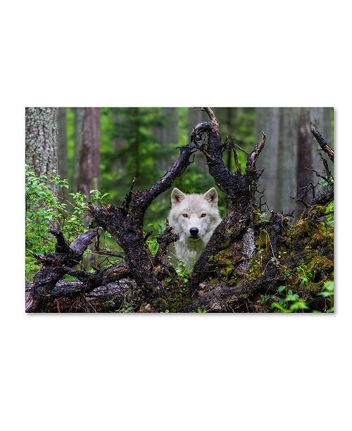 "Trademark Global Mike Centioli 'Wolf' Canvas Art - 32"" x 22"" x 2"""