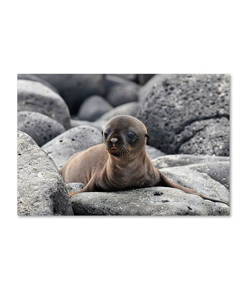 "Trademark Global Ilan Ben Tov 'Galapagos Sea Lion Pup' Canvas Art - 47"" x 30"" x 2"""