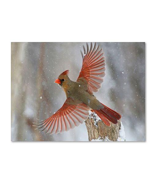 "Trademark Global Mircea Costina 'Snow Storm' Canvas Art - 47"" x 35"" x 2"""