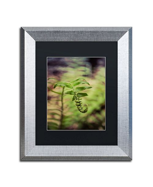 """Trademark Global PIPA Fine Art 'Growth of the Forest Floor' Matted Framed Art - 11"""" x 14"""""""
