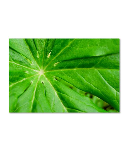 "Trademark Global PIPA Fine Art 'Peaceful Greenery' Canvas Art - 16"" x 24"""