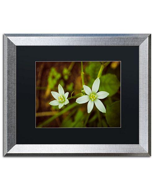 """Trademark Global PIPA Fine Art 'Wild Beauty' Matted Framed Art - 16"""" x 20"""""""