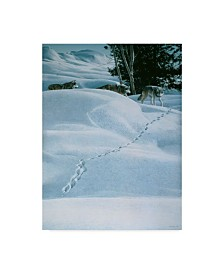 """Ron Parker 'Winter Tracking' Canvas Art - 18"""" x 24"""""""